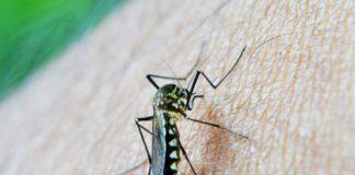 Malaria Mosquito, Dengue
