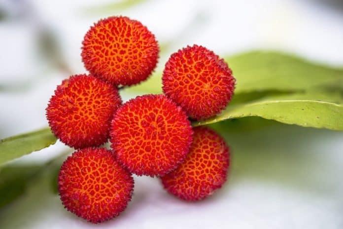 Fruit Lychee